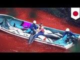 Pagpatay ng dolphins sa Taiji, Japan, natigil na sa wakas!
