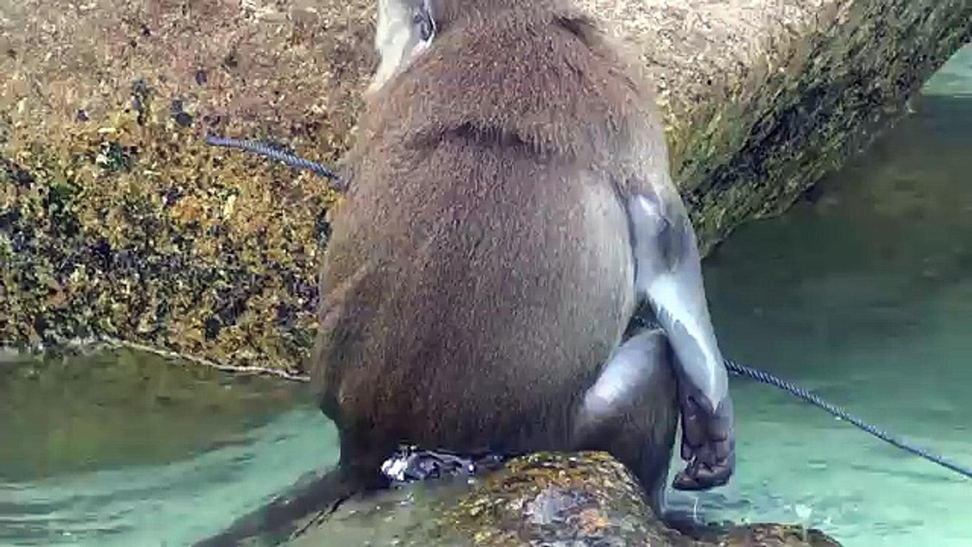 CUTE MONKEY VIDEO, FUNNY MONKEY VIDEO, MONKEY SWIMMING, CUTE ANIMALS, FUNNY VIDEOS