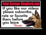 German Shepherd dog symptoms - Sick German Shepherds