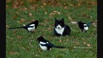 A Curious Cat Meets Some Curious Birds