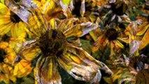 Living Building Challenge - Bullitt Center Flower Power