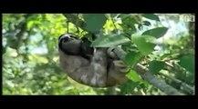 Honey Badger Narrates: The Slowass Sloth (original narration by Randall)