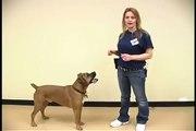 Dog Tricks : Sitting Pretty Dog Trick