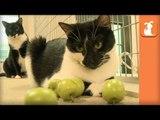 Magic Kittens Shrink Tiny Apples - Kitten Love