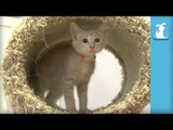 Cute Kitten FLIPS OUT and KNOCKS OVER Cat Tree! - Kitten Love
