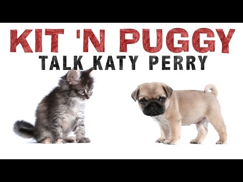 Katy Perry – Kit 'N Puggy