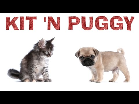 Ariana Grande – Kit 'N Puggy