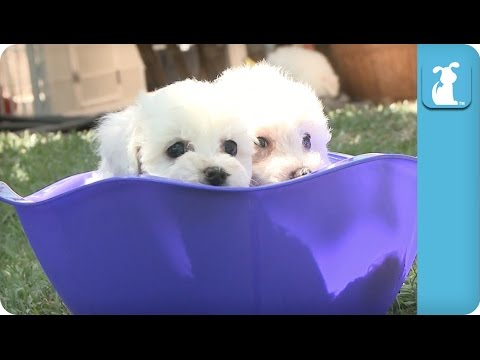 A Bowl Full Of Puppy! OMG! – Puppy Love