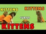 Kittens, Kittens and Kittens - Episode 3