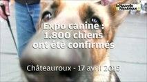 VIDEO. Expo canine : 1.800 chiens confirmés à Châteauroux