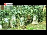 Solidarites Kenya  Sack Garden Project -