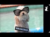 Miley Cyrus - We Can't Stop (PET PARODY) -- Maltey Cyrus - We Can Bark (Full Version)