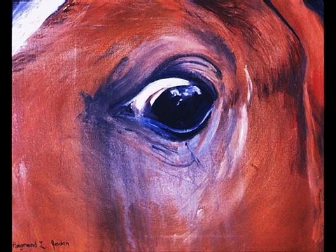 Horses Eyes
