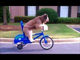 funny - dog - compilation - best - pets - agility - amazing - dogs - talent - canine - tricks - 2014