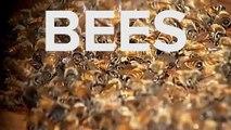 Truck Crash Spills Millions Of Bees