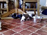 5 week old shih tzu puppies playing and going crazy SONG BY Brother luke:- ALONE