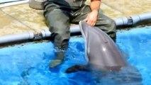 Acquario di Genova - Dietro le quinte... I Delfini