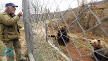 People And Bears Make Easy Neighbors In Croatian Village