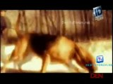 Disappeared 18th April 2015 Video Watch Online pt2