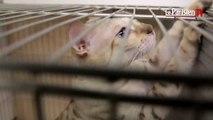 Salon Chiens-Chats : «Le chat vous tolère, le chien vous vénère»