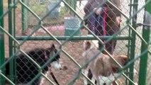 Ce Husky ne veut pas quitter le parc et il le fait savoir