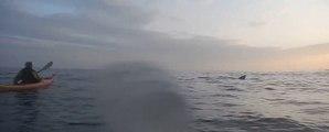 Sea Kayaker Has Close Encounter With Basking Shark