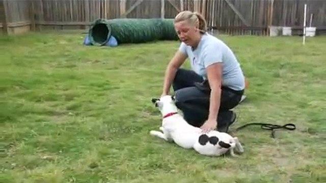 Basic Dog Training Tips : Using Down Commands: Dog Training