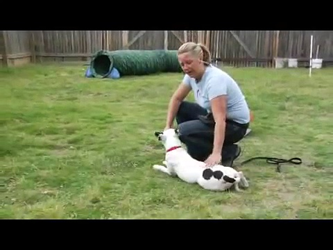 Basic Dog Training Tips : Using Down Commands: Dog Training