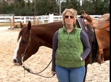 How to Trot Your Horse : How to Do a Posting Trot on a Horse