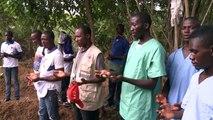 OMS: Agir sur tous les fronts contre le virus Ebola en Sierra Leone