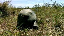 Mochuelos Excavadores | Animales Salvajes - Planet Doc