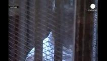 Egypte : 20 ans de prison pour Mohamed Morsi