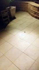 Il tue une araignée énorme et il en sort des centaines de bébé