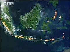 BBC Wild Nature Unique Sulawesi Animals Indonesian Fire Isla