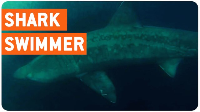 Swimming With Basking Sharks | Just Keep Swimming