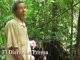 Bosques de Honduras en guerra (War in the Honduran Forests)