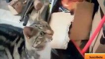 Videos graciosos 2014 - Videos de risa de animales chistosos - Perros, gatos y m