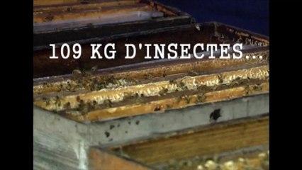 Cet homme se recouvre d'un million d'abeilles et entre dans le livre des records