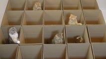Paradis des Chats... 20 boites pour 9 chatons trop mignons !