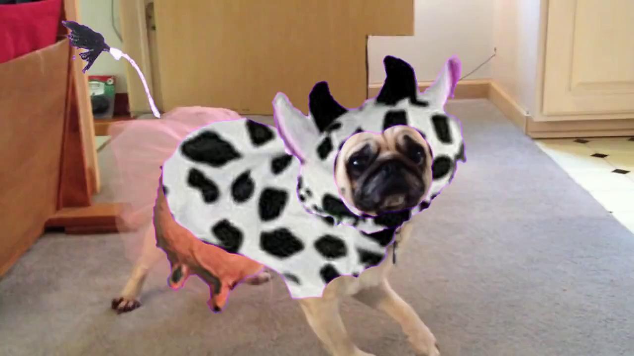 Pug in Tutu Dancing