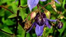 Masterpiece: Beautiful Flowers (2) Gleisberg - Opus Pour Fleurs