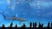 Dünyanın En Büyük Akvaryumu