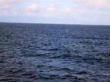 Galapagos - Jumping fish