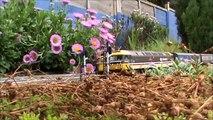 Hampton Field Railway - 1 July 2013 - British OO gauge garden railway
