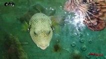 فصائل أسماك جميلة جدا فى معرض الأحياء المائية بالأسكندرية  وللأسف لا يوجد بها أهتمام