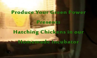 Hatch Chickens in Homemade Incubator