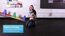 How to Teach a Pomeranian Tricks   Dog Tricks