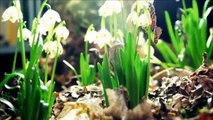 Amazing Nature Plants Growing Blooming Flower TimeLapse (Slow Motion)
