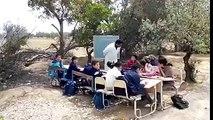 شاهد تلامذة مدرسة ببوحجلة يدرسون تحت شجرة زيتون