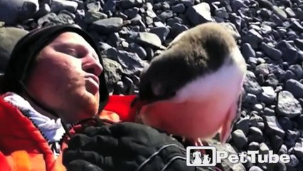 Baby Penguin Meets Human for the First Time